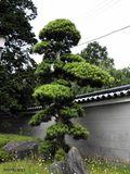 Naritasan temple 7